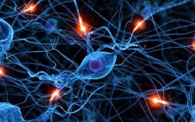 La meditación puede provocar cambios considerables en las estructuras del cerebro
